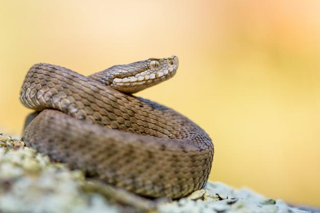Conférence : « Des serpents dans nos têtes : pourquoi sont- ils aussi… »
