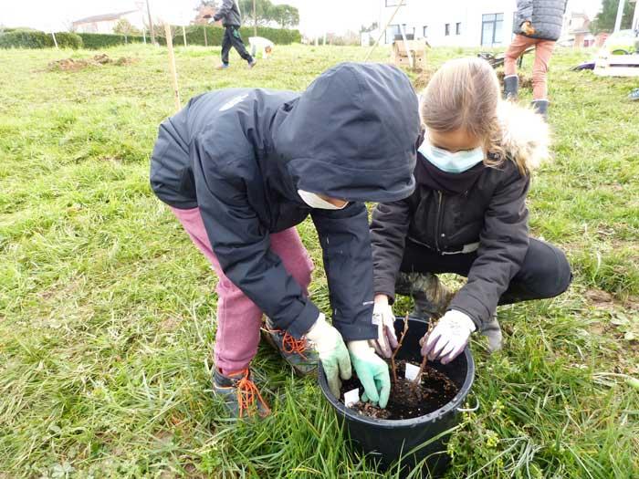 Opération plantation par les élèves de l'école